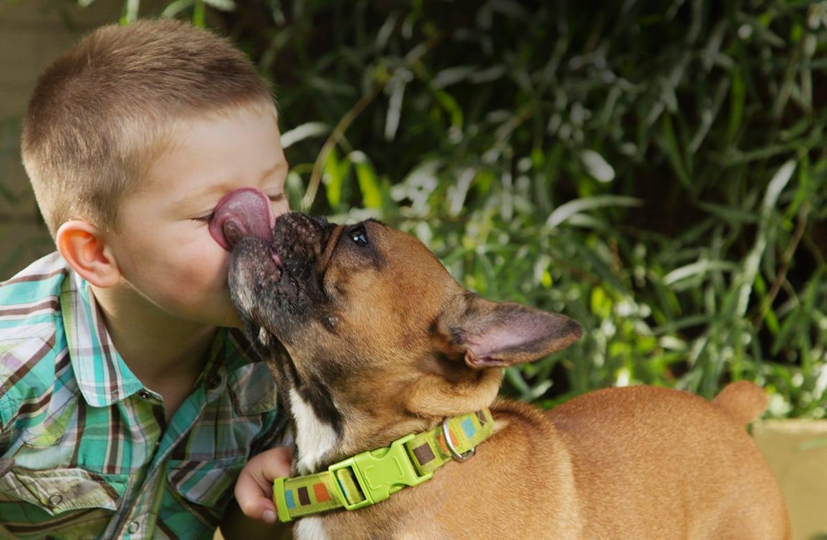 Pet Care in Groveport